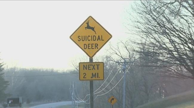 Suicidal deer sign Iowa_194878