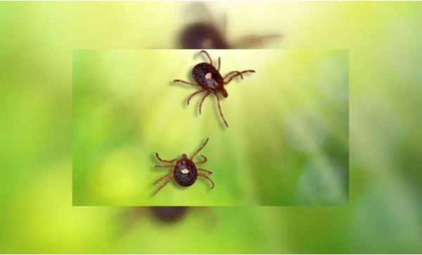 Ticks_205177