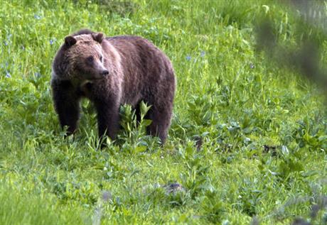 bear_190260
