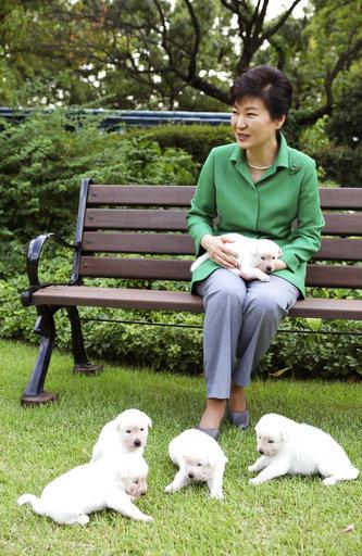South Korea Politics Park's Dogs_280507