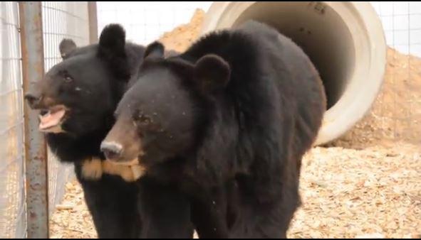 bears2_18451