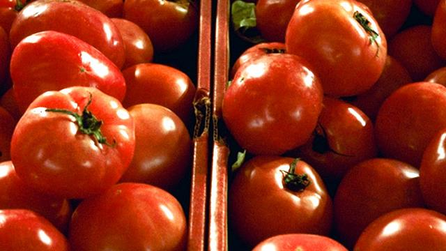 tomatoes_149844
