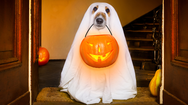 Halloween Ghost Dog Trick Or Treat_375892