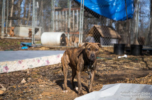 16 dogs rescued from suspected fighting operation in Middle
