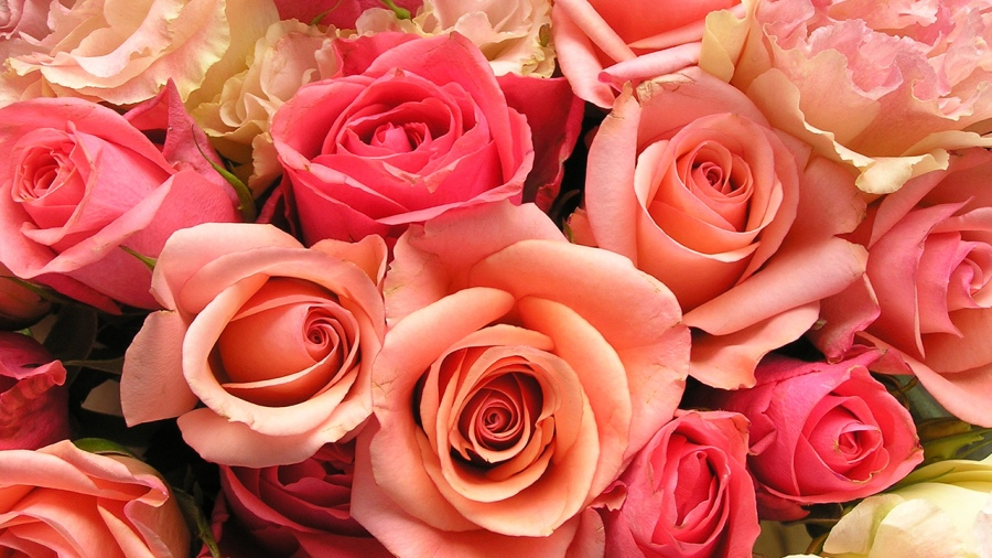 roses-flowers-valentines-day_1517879321399_340223_ver1_20180206195501-159532