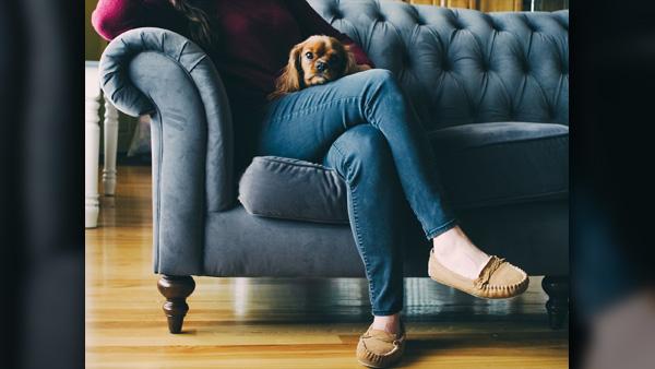 dog-couch_1520370996045.jpg