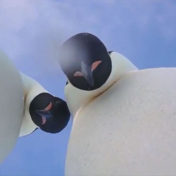 penguins_1520689065991.jpg