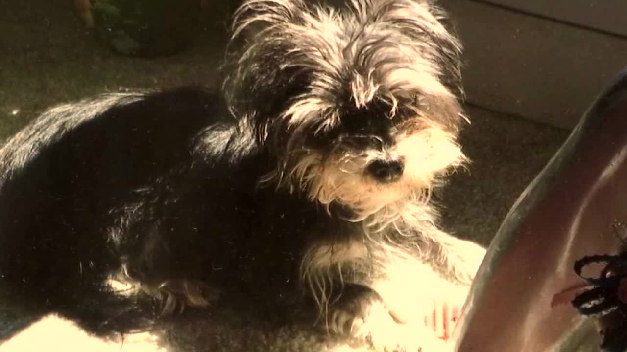 Clinton couple has trouble getting deposit back on Yorkie puppy