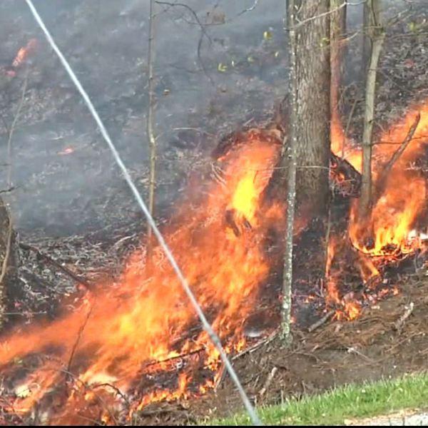 burn permit wildfire_1539639178915.JPG.jpg
