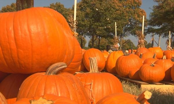 pumpkins_244470