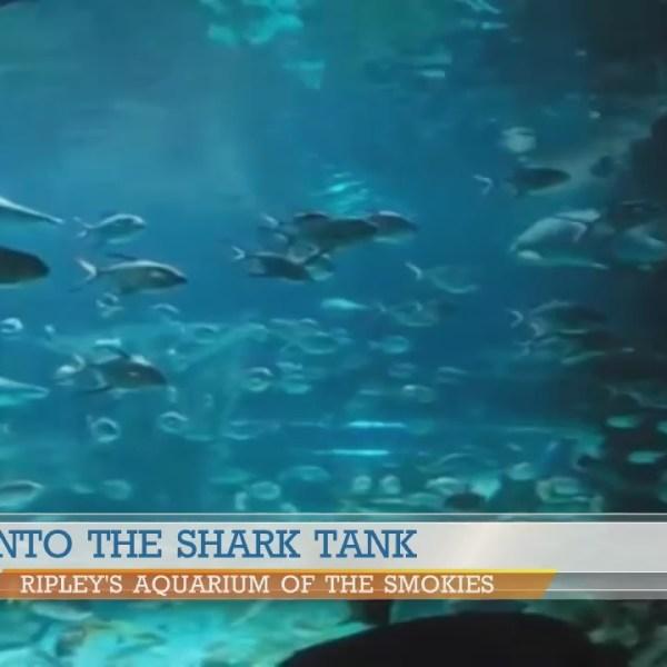 Shark Tank divers