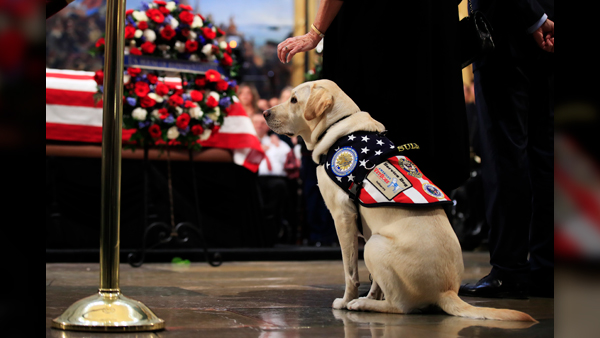 Sully_the_service_dog_1543949620015.jpg