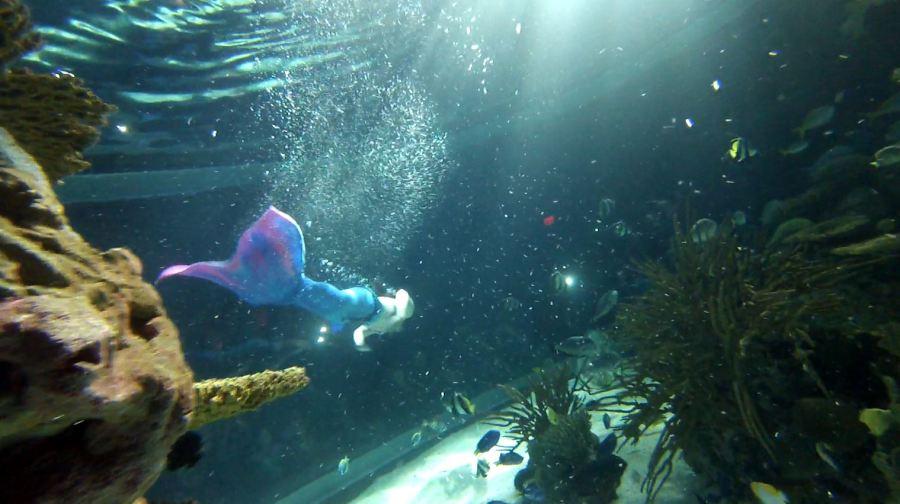 COVER PHOTO_Ripley's hosts job fair and seeking mermaids too_0315_1552683063088.JPG.jpg