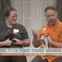 Cute kittens from the Humane Society of the Tennessee Valley