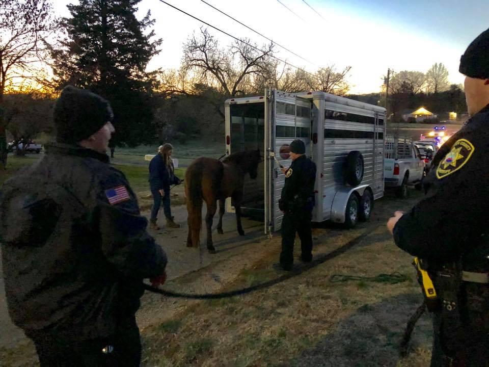 LCSO horse capture 4_1553352337054.jpg.jpg