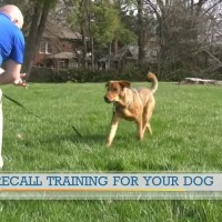 Recall training for your dog