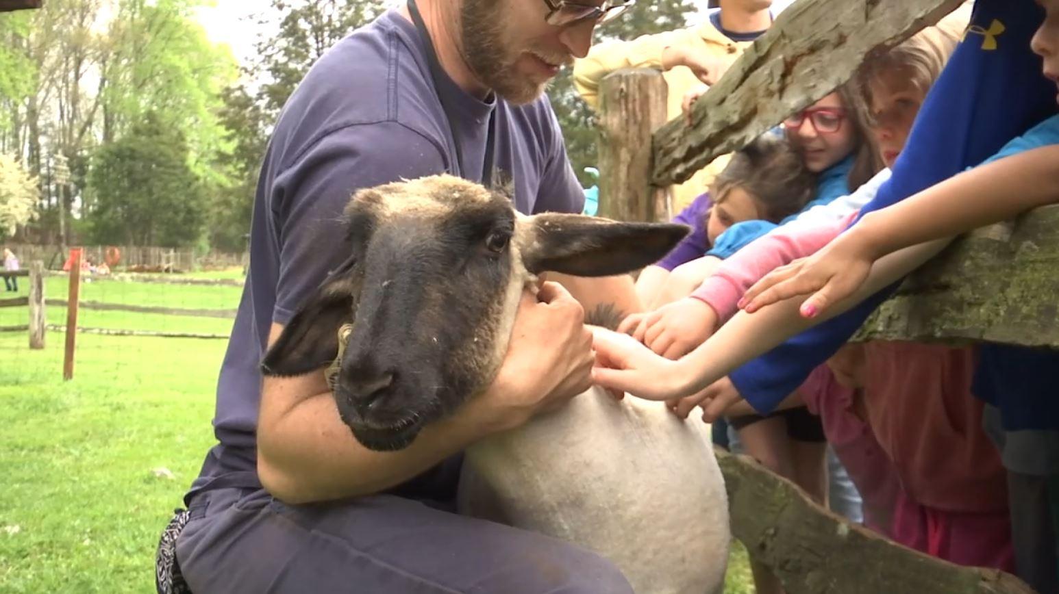 COVER PHOTO_Sheep Shearing_0412_1555101921135.JPG.jpg