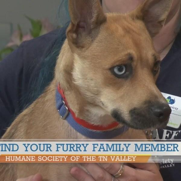 Humane Society of the TN Valley: Mona