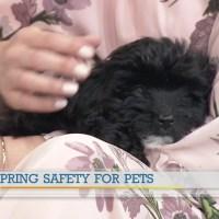 Petland talks spring safety for pets