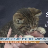 Summer Camps for animal lovers at Humane Society of the TN Valley