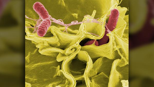 bacteria-67659_1920_1556830331854.jpg