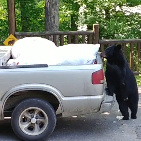 bear-wears-valley-05-28-19_1559083252008.jpg