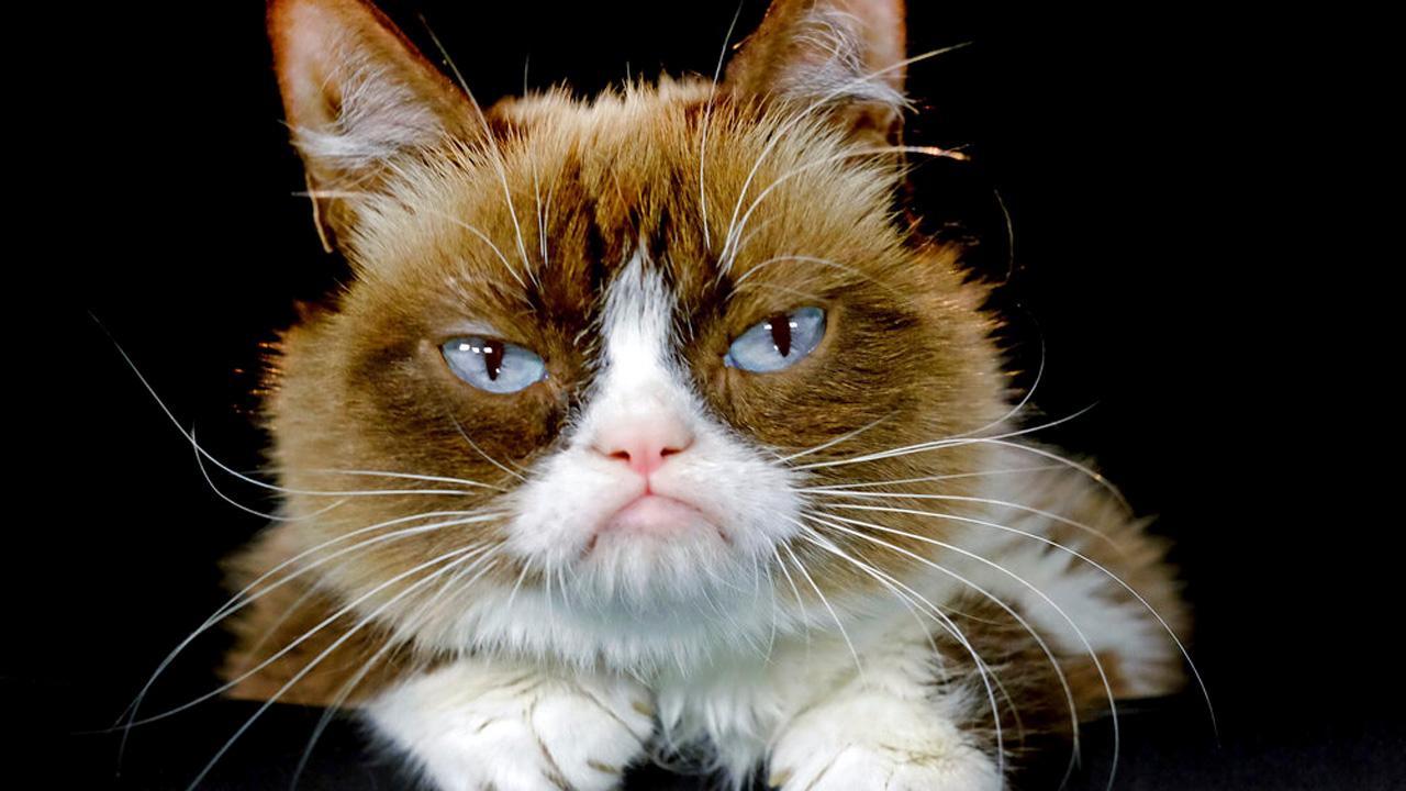 grumpy cat web_1558093835557.jpg-873772846.jpg