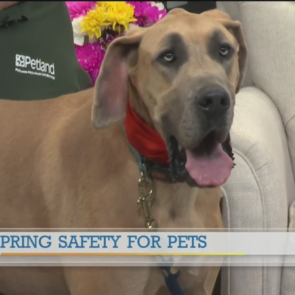 Petland Spring safety for pets