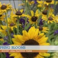Rocky Hill Flower Farm