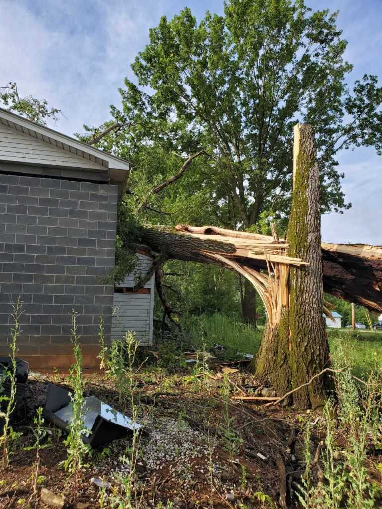 Storms leave downed trees