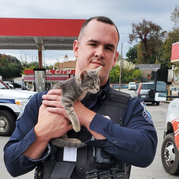 knoxville police rescues cats from stolen u-haul